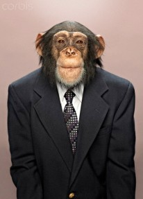 Studio portrait of chimp wearing suit
