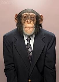 Studio portrait of chimp wearing suit